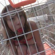 檻の中に入れられ野外で監禁飼育